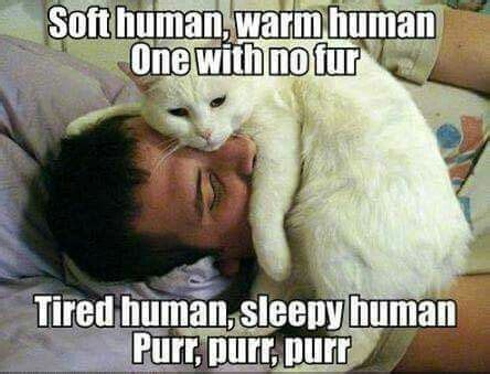 animal lovers images  pinterest animals
