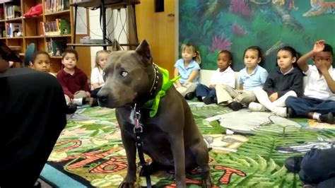 tail wagging tales therapy dog reading program  elle