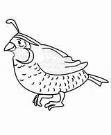 Quail Coloring Preschool Printable Animals Missouri Worksheets Colorluna Animal sketch template