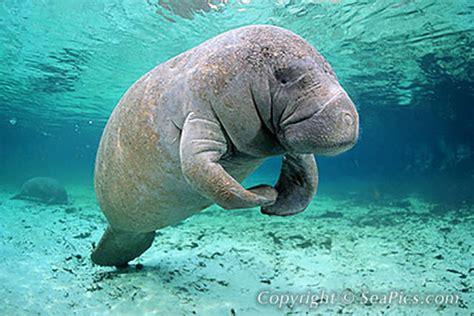 oddest animals  exist  real life  pics