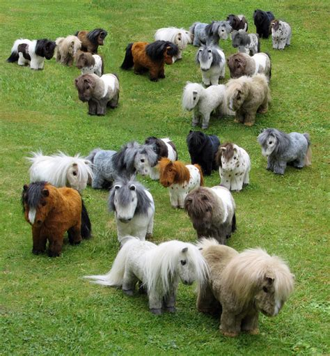 shetland pony miniature ponies horses herd together fun mini project animals whole they pretty funny baby cute sheep christmas dog
