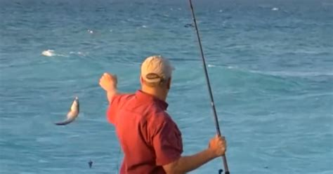 shore fishing florida wildlife fish rules shark fwc conservation commission based boat commercial draft