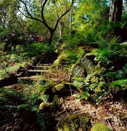 Woodland Garden Lochalsh Low Shade Gardens Maintenance