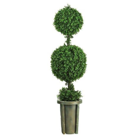 5 foot Double Ball Leucodendron Topiary in Decorative Vase
