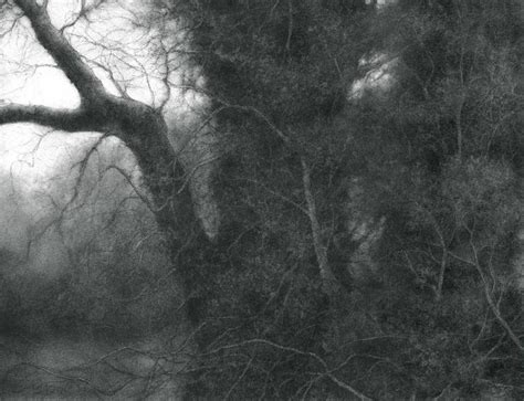 modern charcoal drawings sue bryan the root of the root modern realist charcoal drawing of tree in forest for sale at