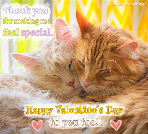 valentine cats    ecards greeting cards