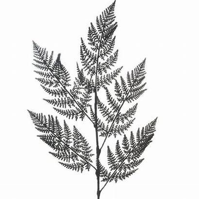 Fern Leaf Woodland Artificial Spray