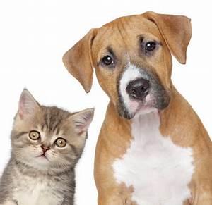 Mit Katze Umziehen : umzug mit fiffi mietzi co nachsendeauftrag f r ihre ~ Michelbontemps.com Haus und Dekorationen