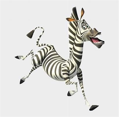 Zebra Madagascar Marty Clipart Africa Colors Escape