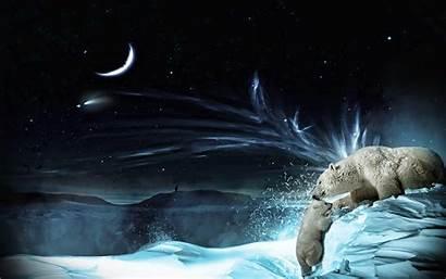 Polar Oso Fondo Pantalla Bears Wallpapers Fondos