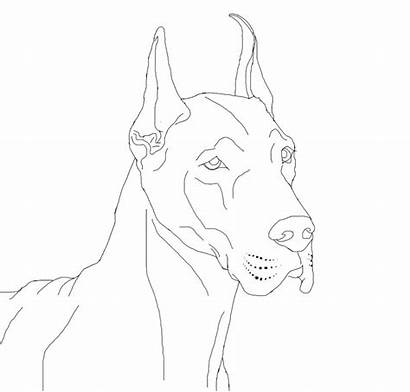 Coloring Dane Pages Lineart Dogs Danes Drawings