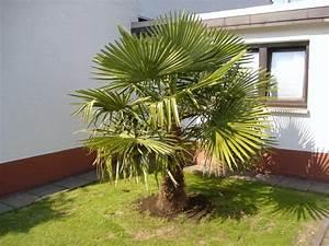 Palmier De Jardin : am nagement de jardin prot ger les plantes en hiver ~ Nature-et-papiers.com Idées de Décoration