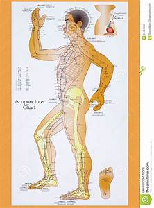 Traditional Chinese Acupuncture Chart Editorial Stock Photo