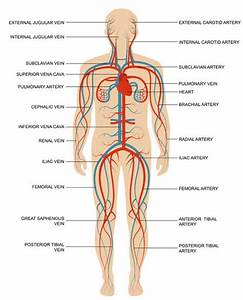 Spinal Blood Supply