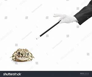 Magician Holding A Magic Wand And A Frog Isolated On White ...