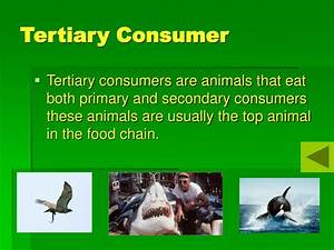PPT - The Food Chain PowerPoint Presentation - ID:706666