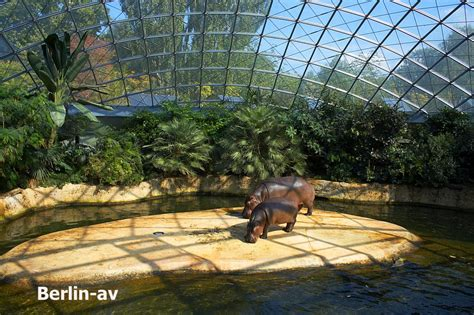Zoologischer Garten Berlin Winter by Quot Die Henne Quot Berlin Av Berichte Fotos Und Aus