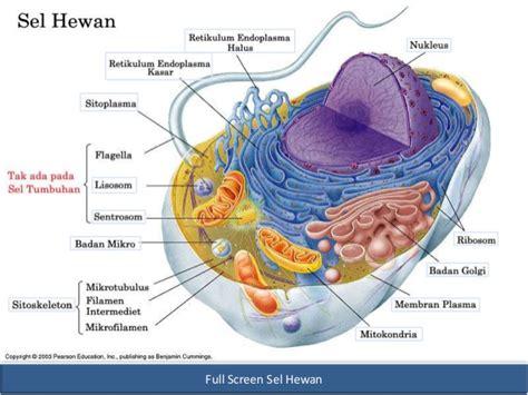 struktur fungsi  teori sel incomplete