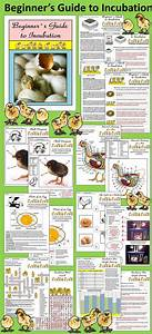 35 Best Images About Egg Hatching Experiment On Pinterest