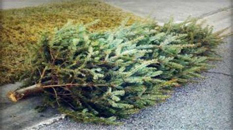 city of los angeles announce christmas tree recycling