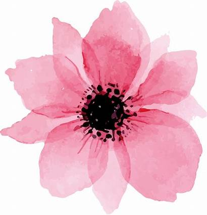 Watercolor Flower Flowers Clipart Transparent Pngio