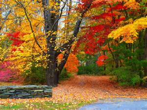 Wallpaper High Resolution Fall Backgrounds by Nature Wallpaper Of Colorful Autumn Forest In High