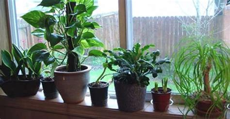 grow ls for indoor plants best air cleaning plants recommended by nasa