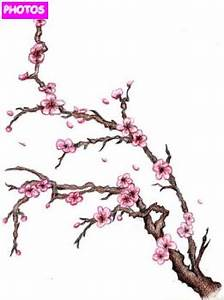 cherry-blossom-tree-drawing-6.jpg 261×350 pixels   Tree ...