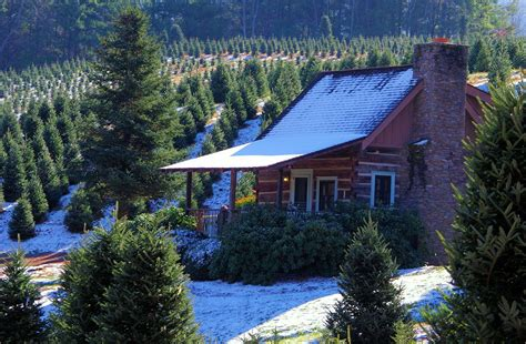 piper mountain christmas tree farm for sale log cabin rental in the carolina smoky mountains near asheville