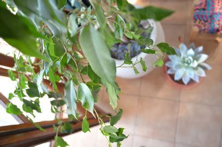 plante dans chambre à coucher dormir avec des plantes dans la chambre danger