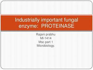 industrial applications of fungal proteases