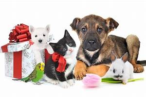 Holiday Gift Ideas for your Dog or Cat