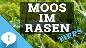 Moos Im Rasen Ursachen : moos im rasen tipps gramina ~ Lizthompson.info Haus und Dekorationen