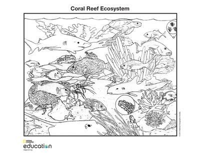 coloring pages national geographic society