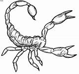 Scorpion Clipart Scorpio Coloring Pages Tattoo Desert Printable Animals Designs Adult sketch template