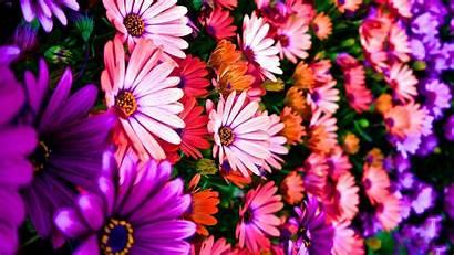 4k Flower Wallpapers Wallpapersafari Wallpaperup