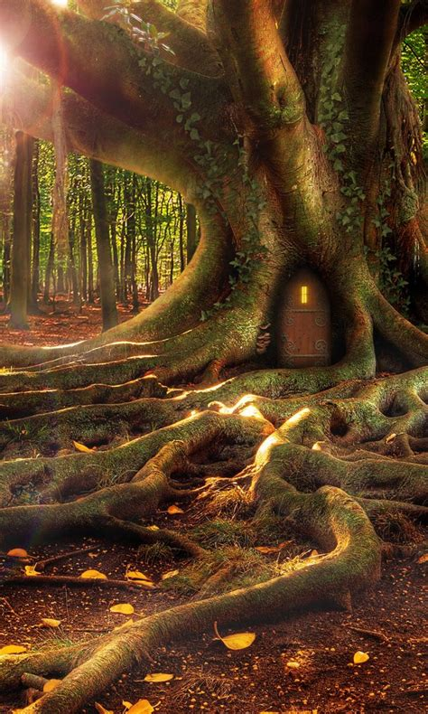 treehouse   fantasy forest hd wallpaper hd wallpaper