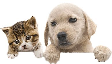 Pet Paired Names  Pet Name Search By Movie Stars