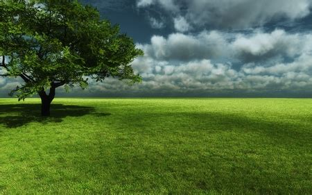 endless green grass nature background wallpapers