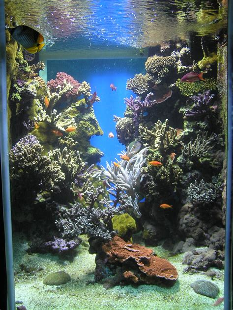sea reef aquarium reef aquarium
