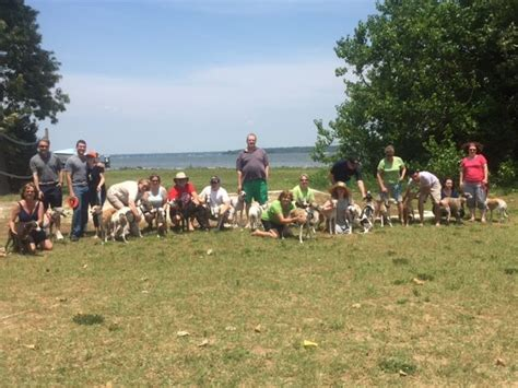whippet playdate club  maryland dc  northern