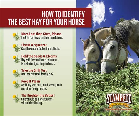 hay quality signs horse forage premium stampede makes diet