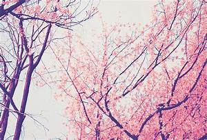 pretty trees on Tumblr