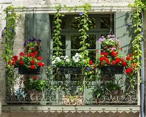 beeren fur den balkon wir zeigen euch welche ideal sind With französischer balkon mit welche bäume für den garten