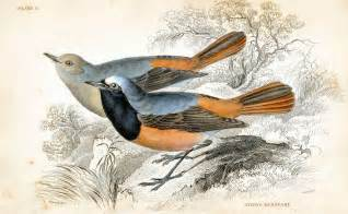 Vintage Bird Prints Clip Art