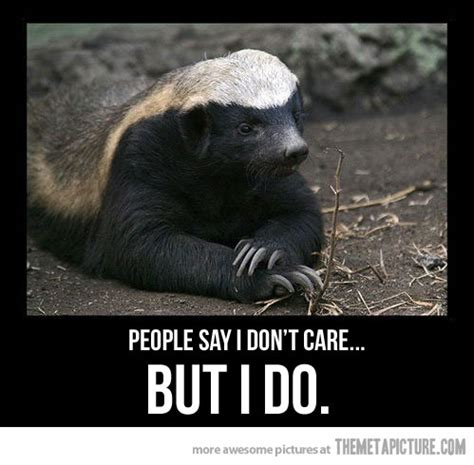 Honey Badger Don T Care Meme - do you care stickey s place o stuff day one patch boards