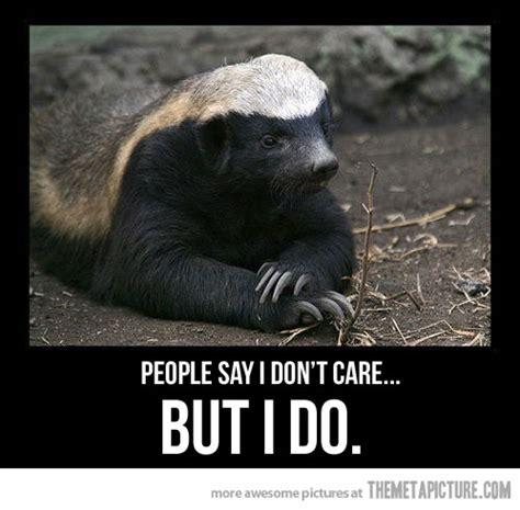 Meme Honey Badger - misunderstood honey badger the meta picture