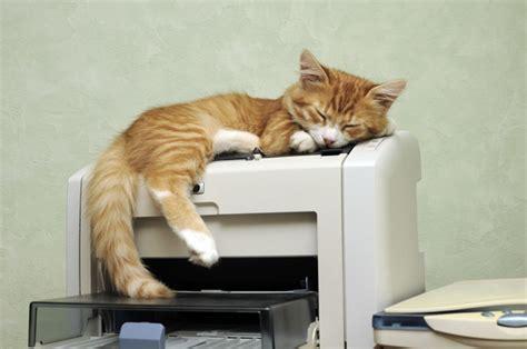 animali in ufficio cani e gatti in ufficio da oggi 232 possibile