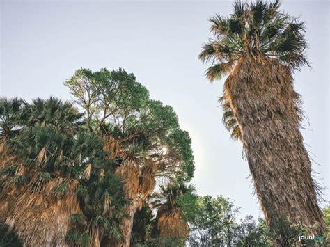 Il Parco Nazionale Del Joshua Tree California On The Road