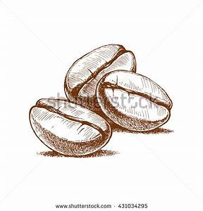 Painted Coffee Beans Sketch Vector Drawing Stock Vector ...